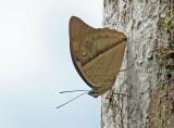 Butterfly-Guacamayos2.jpg