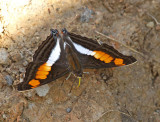 Butterfly-NWC6.jpg