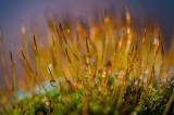 December 02 - Drippy Moss