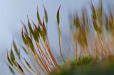 01 February - Moss