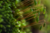 31 March - Mossy Bits