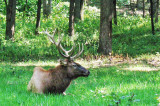 Wildlife in Lone Elk Park
