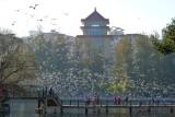 Yunnan 雲南