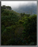 The view from Orquideas del Valle Bosque de Niebla