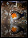 Robin at Waters Edge