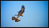 Red Kite Aerobatics