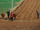 5ème jour de Shaxi a Lijiang