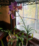 den orchid happy in his new home