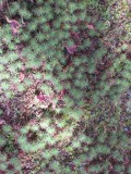 Texture of Japan  -  moss on stone