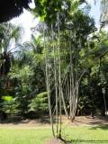 Palms, Wetlands Boardwalk