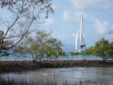 Mangroves, Port Douglas
