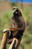 Mamíferos - Mammals