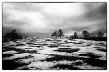 The World in Black & White