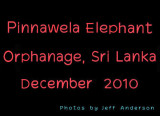 Pinnawela Elephant Orphanage, Sri Lanka (December 2010)