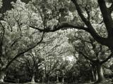 TreeLined2968