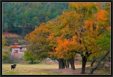 Bhumtang : Kurje Monastery.