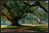 Under the venerable Banyan trees. Pindaya.