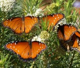 Visitors to Sandys Butterfly Garden