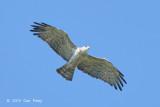 Eagle, Short-toed Snake @ Tmatboey