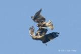 Eagle, Booted @ Seletar