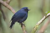 Robin, Sunda Blue @ Summit Trail