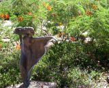 Garden statuary at Taliesen West