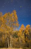 Autumn Grande Finale