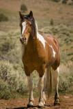 Bold Stallion