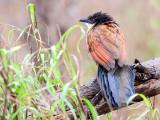 Birds,  Kruger. National Park