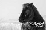Frozen pony
