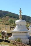 White Pagoda and Yak DSC_8736