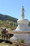 White Pagoda and Yak DSC_8738