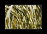 Spaghettis + green pesto or old wire fence?