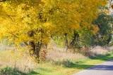 Autumn Roadside 29579