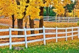 Autumn Fence 20121021