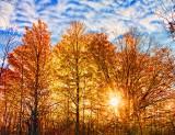 Backlit Autumn Trees 29819