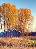 Last Of The Fall Foliage 20121105