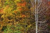 Autumn Color 29411