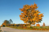 Autumn Tree 29833