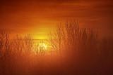 Foggy Sunrise 20121204