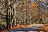 Autumn Back Road 29870