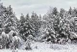 Snowfall 32366