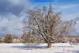 Winter Tree 20121225