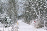 Wintry Cataraqui Trail 32387