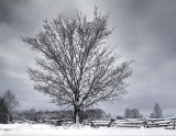 Winter Tree 32379