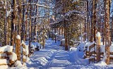 Winter Laneway 32613
