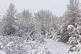 Snowscape 32520