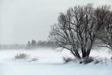 Trees Beside Frozen Canal 32727