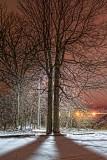 Bright Night Sky 33329-32