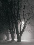 Foggy Winter Night 33254,59-64B